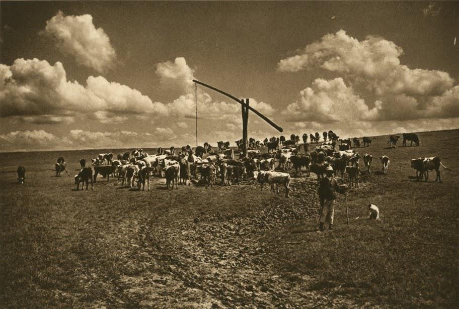 111Fotografi-romani-kurt-hielscher