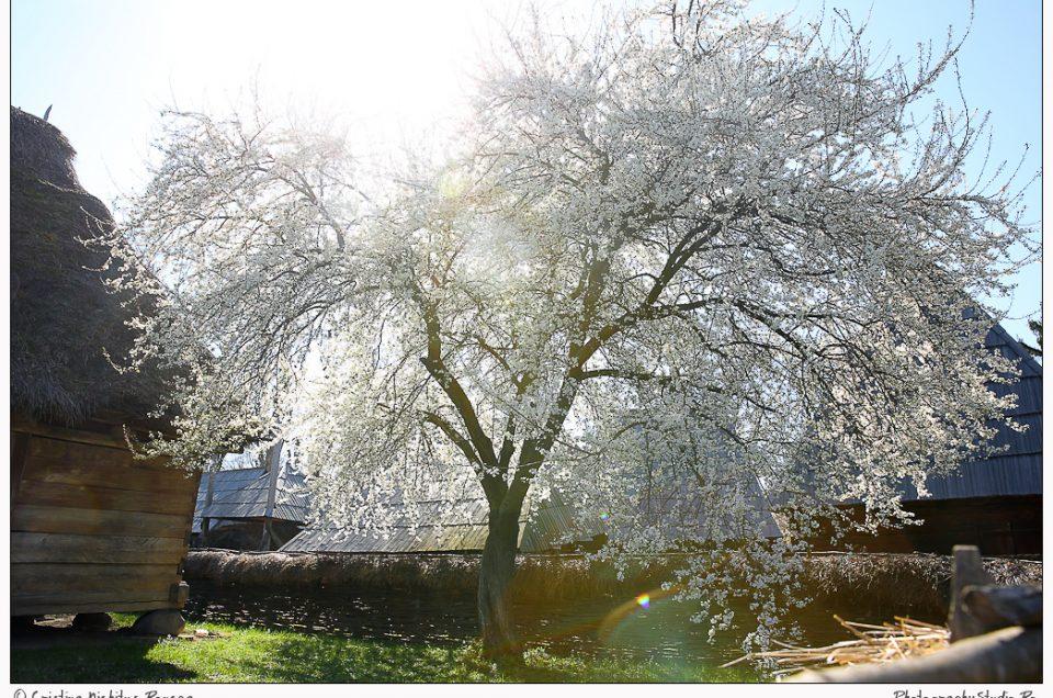 Photography Studio vă invită la Floriile cu Soare de la Muzeul Satului
